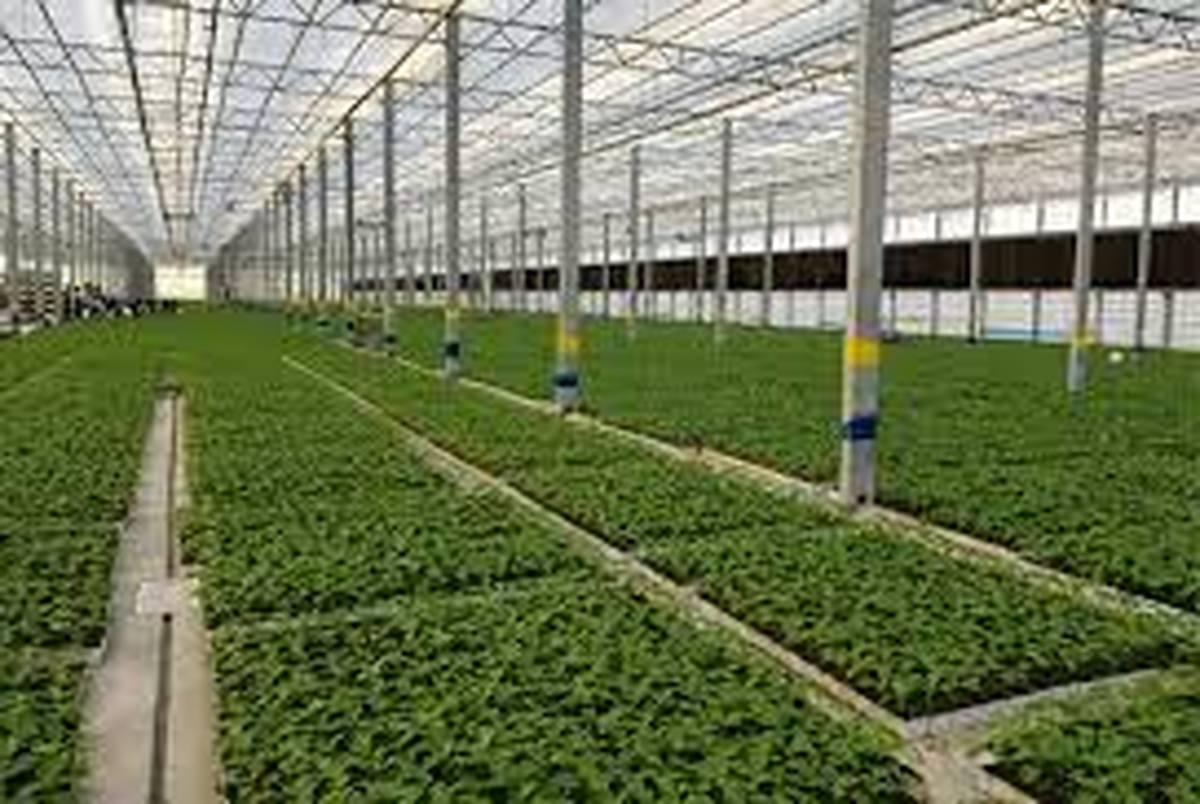 حسگر رطوبتی طراحی شد/ قابل کاربرد در گلخانه ها