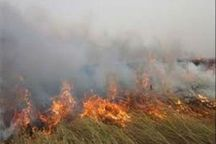 نیزارهای حاشیه جاده اهواز - آبادان دچار آتش سوزی شد
