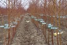 700 هزار اصله نهال میوه آماده توزیع در خراسان شمالی
