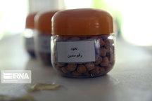 سالانه ۲۶ هزار تن بذر در همدان گواهی می شود