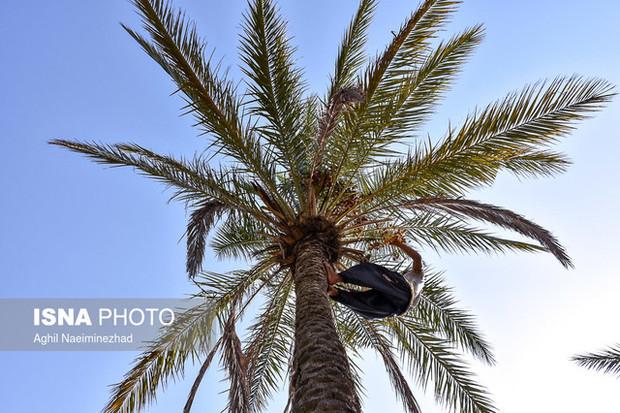 جشن هامین در سیب و سوران برگزار میشود