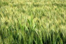 توجه به کشاورزی در زنجان به موازات سایر بخشها جدی است