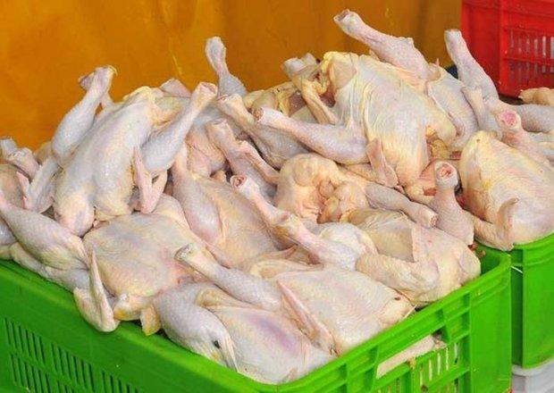 پیشی گرفتن عرضه بر تقاضا؛ قیمت مرغ در گلستان را کاهش داد