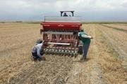 کشت برنج با 70 درصد صرفه جویی در آب