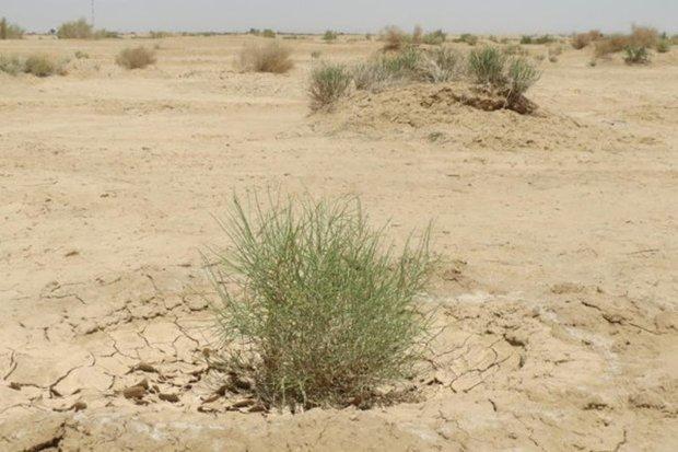 350 هزار هکتار مراتع گلستان درمعرض بیابانی شدن است