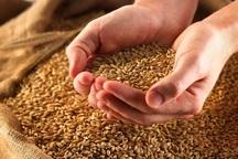 قیمت تضمینی خرید گندم افزایش یابد