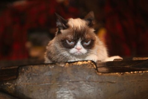 گربه مولتی میلیونر اینستاگرامی مُرد