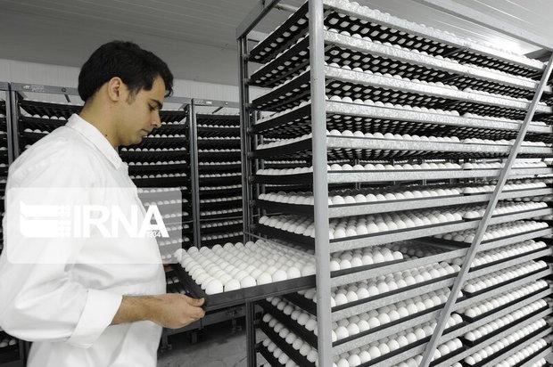 ۶۰ درصد صادرات فراورده های دامی خراسان رضوی تخم مرغ است