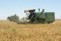 31 هزار هکتار از مزارع شادگان زیر کشت پاییزه رفت