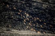 تعیین جنگل های هیرکانی شمال به عنوان مناطق ممنوعه شکار