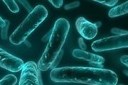 میکروب چند زبانه کشف شد!