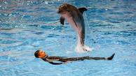 آیا دلفین برج میلاد بیمار است؟