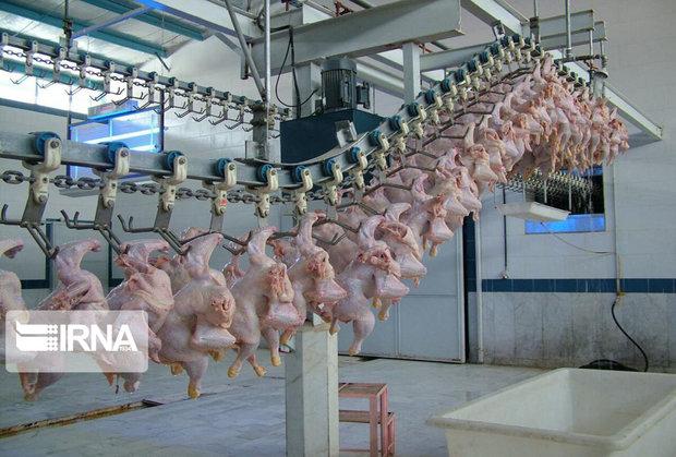خرید و ذخیره گوشت مرغ مازاد نیاز در اردبیل آغاز شد