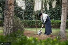 امسال رهبر انقلاب چه درخت هایی کاشتند؟