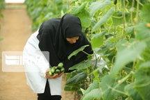 ۲ هزار ۴۰۰ تن محصولات صیفی و سبزی در خمین تولید شد