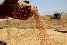 3واحد متخلف تولید آرد گلستان جریمه شدند