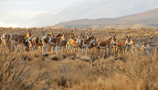 نابودی محیط زیست ایران در ازای 40 هزار تومان چینی!