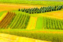 رصد اراضی زراعی و باغی قزوین از سوی تیمهای حفاظتی سازمان جهاد کشاورزی