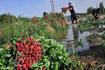 تهدید سلامت مردم با هدایت فاضلاب به سمت اراضی کشاورزی