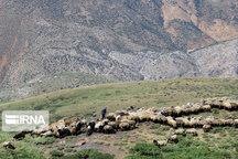 ترمیم و بهسازی ۴۰۰ کیلومتر از ایلراههای عشایری گلستان آغاز شد