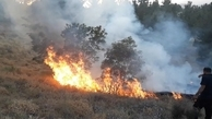 جنگل های بلوط برای پنجمین بار در سال جاری آتش گرفت
