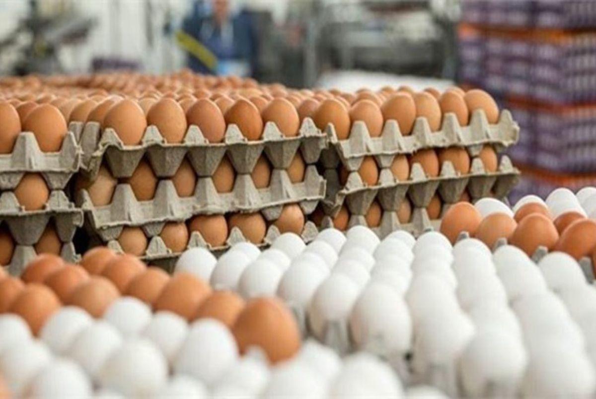 تخم مرغ دوباره گران می شود/ قیمت شانه کاغذی تخم مرغ طی دو سال بیش از 16 برابر شده است!