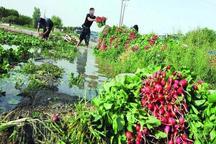 آبیاری مزارع اهر با فاضلاب خام