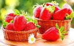 همه فوت و فن های کاشت توت فرنگی در منزل
