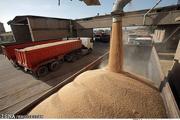 واریز بهای کامل گندم ظرف یک هفته به حساب کشاورزان