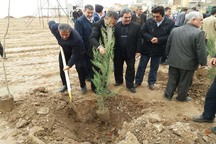 شهردار مراغه، توسعه فضای سبز را از اولویت های مدیریت شهری خواند