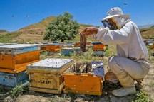 زنبورداران داورزنی 10میلیارد ریال تسهیلات دریافت کردند